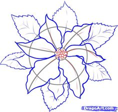 how to draw a poinsettia step 4