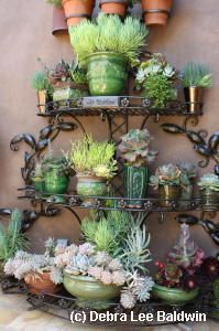 My book, Succulent Container Gardens, describes numerous ways to pair plants with pots, plus intriguing, eye-catching ways to display them.    The same design principles (repetition, contrast, scale, height) apply to container arrangements.