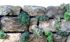 Dry-stone walls are wildlife-friendly, last for ever and are a doddle to build – honest