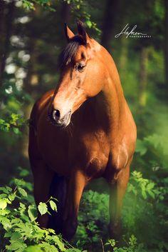 Pferd steht im Wald Pferd | Bilder | Foto | Fotografie | Fotoshooting | Pferdefotografie | Pferdefotograf | Ideen | Inspiration | Pferdefotos | Horse | Photography | Photo | Pictures