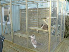 Nät till kattgård - 09. Recensioner och tips - Ragdoll iFokus