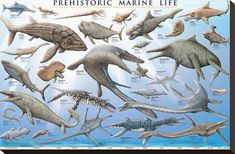 A wonderful poster of Prehistoric Marine Life - the dinosaurs who inhabited the mysterious deep-sea world of Prehistory! Check out the rest of our amazing selection of Dinosaur posters! Need Poster Mounts. Prehistoric Dinosaurs, Prehistoric World, Prehistoric Creatures, Sea Dinosaurs, Dinosaur Posters, Dinosaur Art, Life Poster, Extinct Animals, Sea Monsters