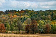 Kietrz - las w jesiennej odsłonie