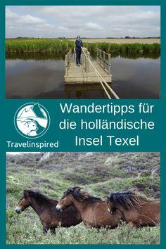 Wandertipps für deinen Texel Urlaub: beim Wandern durch die Naturschutzgebiete De Slufter und De Muy knuffige Galloways treffen, Texel Insidertipp: beim Wandern Handfähren benutzen oder halbwilde Exmoor-Ponys beobachten, Texel wandern, Nordsee Urlaub auf Texel Niederlande, Texel Erfahrungsbericht mit Tipps für schöne Wanderrouten auf der holländischen Nordseeinsel, Wandern auf Texel Holland #texel #wandern #demuy #deslufter #wanderurlaub #nordsee #holland #degeul #schafe Reisen In Europa, Love Island, Travel Agency, Beautiful Islands, Wonderful Places, Netherlands, Travel Destinations, Have Fun, Around The Worlds