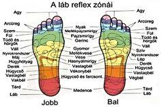 talpmasszazs-reflexologia