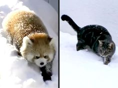 Let It Snow: Animals Who Can't Get Enough of the White Stuff http://www.people.com/people/package/article/0,,20319528_20879045,00.html