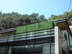 Privacy Fence For Apartment Balcony. Apartment Patio Privacy Screen Interesting Ideas For Home. Home and Family Balcony Privacy Screen, Privacy Hedge, Outdoor Privacy, Balcony Railing, Privacy Screens, Balcony Plants, Balcony Garden, Balcony Ideas, Patio Ideas