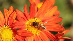 Bees get a buzz out of electricity from flowers