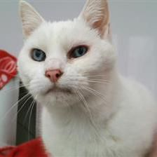 Ava Cat Rehoming Adoption Cat Rehoming Animal Charities Cats