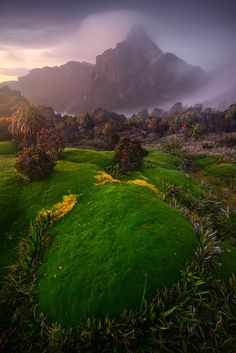 ~~Land Of The Lost | South-West National Park, Tasmania, Australia | by Dylan Gehlken~~