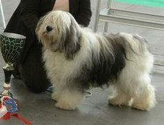 Polish Lowland Sheepdog - PON Polish Lowland Sheepdog, Dog Breeds, Dogs, Animals, Animales, Animaux, Pet Dogs, Doggies, Animal