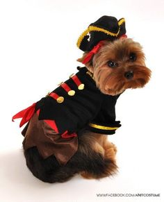 """Buccaneer Pirate Captain"" Dog"