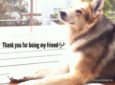 GrouchyPuppy® Blog | Dog Lovers Source: Quotes