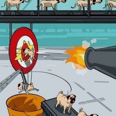 Haha, that's how pugs get made.