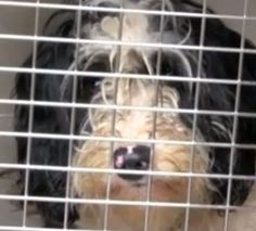 Over 100 dogs were rescued from a puppy mill in Oregon on Wednesday. The Columbia County Sheriff's deputies teamed up with the Oregon Humane Society to rescue the dogs after executing a search warrant.