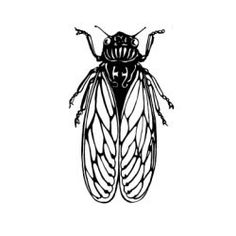 Unmounted Rubber Stamp Cicada by CarolynsStampStore on Etsy