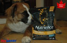 Hazel with her bag of Nutrience® Subzero™ High quality pet food made in Canada: Discover the This post is . Funny Animal Pictures, Dog Pictures, Funny Cats, Funny Animals, Raw Pet Food, Fun Events, Looking For Love, Animal Welfare, Your Best Friend