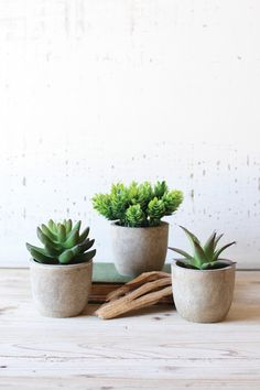 """Beautiful, durable and maintenance free, these artificial potted succulents are an ideal gardening solution for those with a not so green thumb. Display them together or separately for a trendy look that will surly breath new life into any room!all approx. 3½""""d x 4½""""tone of each design. $39"""