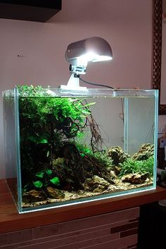 aquascape by Aquaceed Source by aquaPoolkoh
