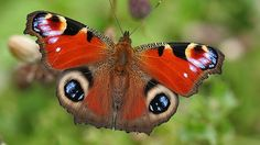 Want to learn more about native butterflies? Visit Westonbirt Arboretum while staying at Ratty's Retreat. www.rattysretreat.co.uk
