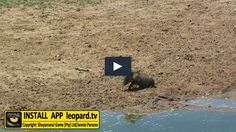 Warthogs will always make you laugh! Watch the video! Tv Videos, Watch Video, Wildlife, Action, Humor, Funny, Group Action, Humour, Funny Photos