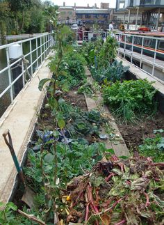 50 Shades of Green – Urban Growth, Greening the City and Growing in Pockets ----  Floating allotment, Kingsland Basin, Hackney, London