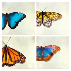 Four butterfly photos nature prints spring butterflies by bomobob, $30.00