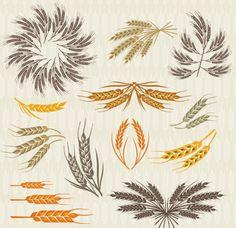 Colorful Wheat Design Vector Graphics