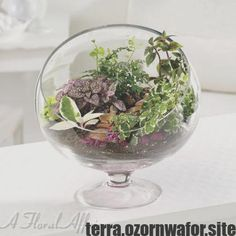Like a mini meditation garden, our terrarium transports the senses. Five varieties of plants are nestled together, creating a wonderous world apart. Terrarium Diy, Terrarium Centerpiece, How To Make Terrariums, Centerpieces, Terrarium Supplies, Terrarium Wedding, Centerpiece Wedding, Prayer Garden, Meditation Garden