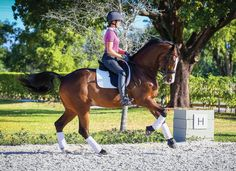 Whether I am showing, training or teaching, I constantly think about balance and symmetry in the horse and rider. These qualities are crucial to the proper execution of every movement in dressage. To