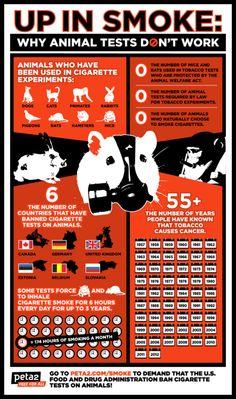 STOP ANIMAL TESTING !!!