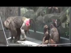Mono de acoplamiento fuerte y rápido