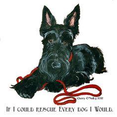 Scottish Terrier Rescue