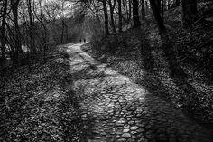 #fuji  #fujifilm  #fujifeed  #fujix100f #tree_magic #magic_shots_ #beautiful_nature #tv_mist #landscape_captures #loves_trees_rural #bnw_greatshots #bnw_life #bnw_planet #bnwpoland #ig_energy_bw  #iphonex #iphoneography #photooftheday #bw_perfect #bnw_perfection #bnw_photography