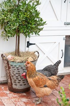 and this... http://heatherbullard.com/2012/11/at-home-chez-poulet-coop-chickens/