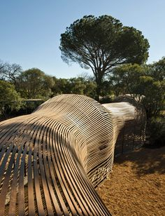 Puff Adder for growing lilies by Patrice Taravella and Terry de Waal