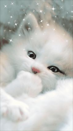 Such a very cute cat😍 Beautiful Cats, Animals Beautiful, Cute Baby Animals, Funny Animals, Kittens Cutest, Cats And Kittens, White Cats, White Persian Kittens, Cat Gif