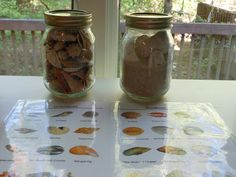 GETTING READY FOR THE BEACH- study shells, starfish, and hermit crabs. plus free Montessori cards