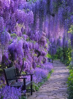 Plant your own garden oasis – i love wisteria! i could just lay under a wisteria tree for the rest of my life. Plant your own garden oasis – i love wisteria! i could just lay under a wisteria tree for the rest of my life.