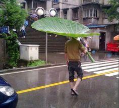 That's A Huge Leaf!