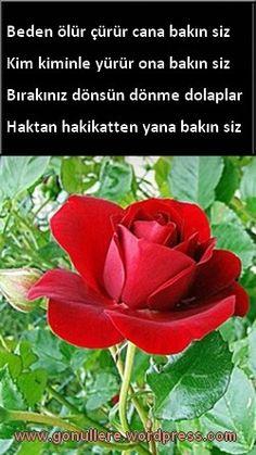 Islam Muslim, Allah Islam, Islamic Quotes, Flowers, Plants, Rage, Roses, Plant, Royal Icing Flowers