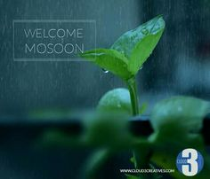 Monsoon makeover for website.