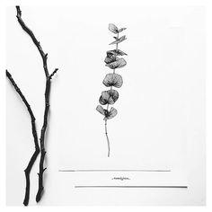 https://www.etsy.com/fr/shop/monocotyledone Douce branche d'eucalyptus. #eucalyptus #plantillustration #plantdrawing #greenillustration #urbanjungle #monocotyledoneleshop #bordeaux #draw #sketching #inkdrawing
