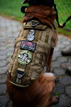 SPANGDAHLEM AIR BASE, Germany – A line of patches rest on the vest of Katya, 52nd Security Forces Squadron military working dog, during a K-9 unit demonstration at the military working dog kennel Oct. 15, 2012. Katya has been with her handler, Staff Sgt. Shannon Hennessy, for nearly two of her four years on Spangdahlem Air Base. (U.S. Air Force photo by Airman 1st Class Gustavo Castillo/Released)