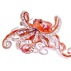 OCTOPUS Original Watercolor Painting   12''x16'' A3 by fairysomnia
