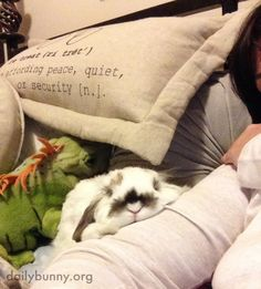 Time for bedtime snuggles for bunny and his human - April 18, 2014