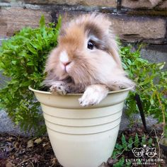 From @sumbapumba: Anybody looking for a furry plants this summer?!!  #cutepetclub [source: http://ift.tt/1P7y4S8 ]