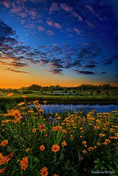 The Day is Coming | wildflower landscape, Wisconsin, horizons by Phil~Koch
