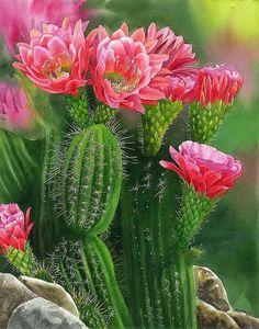 Belleza punta, acuarela ORIGINAL, pintura de cactus, flores acuarela, arte acuarela, EsperoArt.