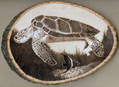 turtle wood by jmix2